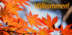 red-maple-leaf-507545_Valkommen_a